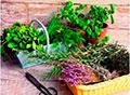 Ароматные, пряные и лекарственные травы